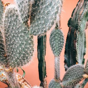 cactus-jvovoyages