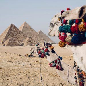 egypte-camel-jvovoyages