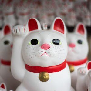 japan-cat-jvovoyages