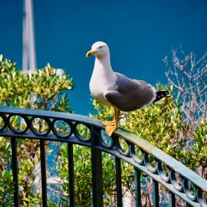 mouette-nice-provence
