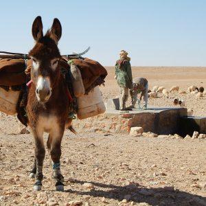 donkey-534906_960_720