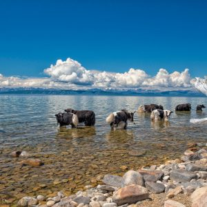 lake-mongolie