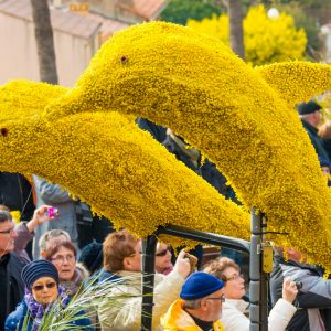 corso-fleuri-bormes les mimosas